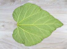 大叶子纹理& x28; 大黄leaf& x29; 免版税图库摄影