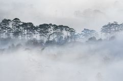 大叻高原土地雾,越南 背景有雾和太阳的杉木森林发出光线第2部分 免版税库存图片