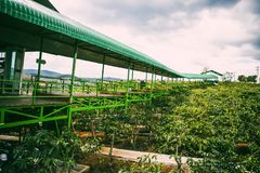 大叻,越南- 2017年2月17日:从我的好的风景视图Linh咖啡,大叻市,越南 免版税库存照片