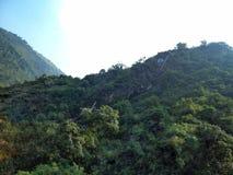 大吉岭岩石山的绿色 库存照片