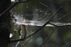 大和几乎坚实蜘蛛网从上面点燃了 免版税库存照片