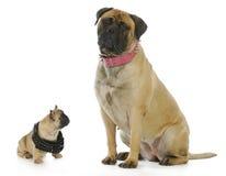 大和小的狗 免版税库存照片