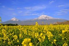 大和小阿勒山在亚美尼亚 免版税库存图片