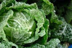 大圆白菜软的焦点在庭院里 库存照片