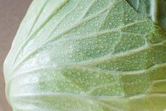 大圆白菜绿色题头蔬菜 免版税库存照片