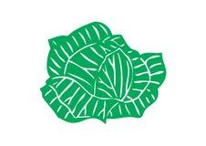 大圆白菜绿色题头蔬菜 库存照片