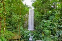 大垂直的瀑布在雨林里 免版税库存照片