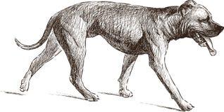大型猛犬 免版税库存图片