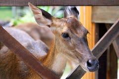 大型装配架鹿 免版税图库摄影