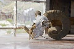 大垫铁绵羊头骨 免版税图库摄影