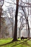 大城市公园 库存图片