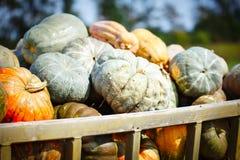 大堆在干草的南瓜在一个木推车收获愉快的感恩天的季节 收获节日 库存图片