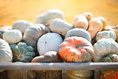大堆在干草的南瓜在一个木推车收获愉快的感恩天的季节 收获节日 图库摄影