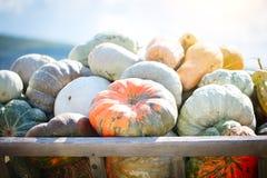 大堆在干草的南瓜在一个木推车收获愉快的感恩天的季节 收获节日 免版税库存图片