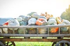 大堆在干草的南瓜在一个木推车收获愉快的感恩天的季节 收获节日 免版税图库摄影