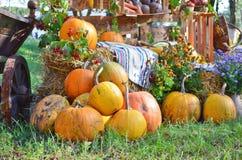 大堆在推车和草的成熟南瓜在万圣节 免版税库存图片