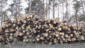 大堆木材注册森林反对日落的背景,收获出口的木材,产业 股票录像