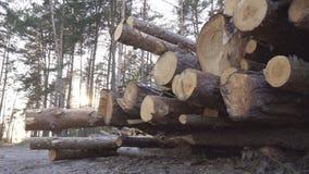 大堆木材注册森林反对日落的背景,收获出口的木材,产业 股票视频