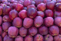 大堆甜和鲜美嘎吱咬嚼的红色桃红色苹果-秋天b 免版税图库摄影