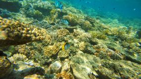 大堡礁珊瑚海洋是美好,在水太平洋下 库存图片