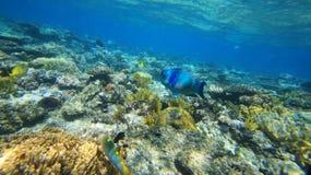 大堡礁珊瑚海洋是美好,在水潜水下 库存图片