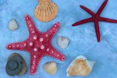 大壳和海星 免版税库存照片