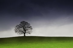 大夜间草好的老结构树 免版税库存图片