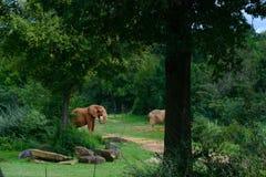 大大象在森林背景中 免版税库存图片