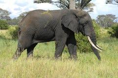 大大象男 免版税库存图片