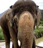 大大象 库存图片