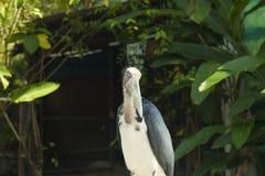 大奇怪的鸟 免版税库存照片