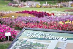 大学每年花试验庭院 图库摄影