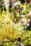 大家的种子,让` s植物 免版税库存照片