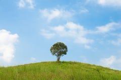 大小山结构树 免版税库存照片