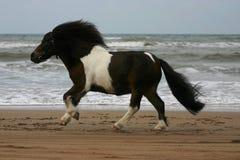 大小的小马运行 免版税库存照片
