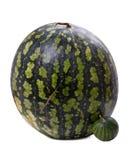 大小的西瓜 免版税库存照片