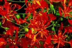 大小组红色和黄色beautyful花 免版税库存图片