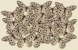 大小组蝴蝶的 免版税库存图片