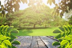 大局树和花在公园 图库摄影