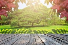 大局树和花在公园 免版税库存照片