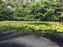 大岛的热带百合池塘 库存照片