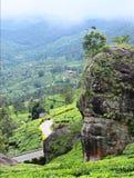 大岩石、多小山路和绿叶所有-绿色行星-自然喀拉拉风景 免版税库存照片