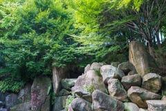 大岩石在狂放的树下 免版税库存照片