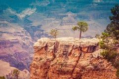 大峡谷和狂放的生活 免版税库存照片