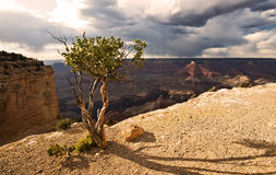 大峡谷和绿色树- HDR剧烈的光 库存照片