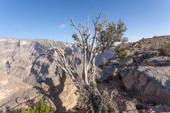 大峡谷在阿曼 图库摄影