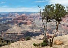 大峡谷的全景在亚利桑那 免版税库存图片