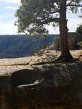 大峡谷的杉树俯视的北部外缘 免版税库存照片