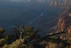 大峡谷纹理和颜色 免版税库存图片