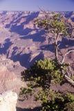 大峡谷,亚利桑那的南外缘 免版税库存图片